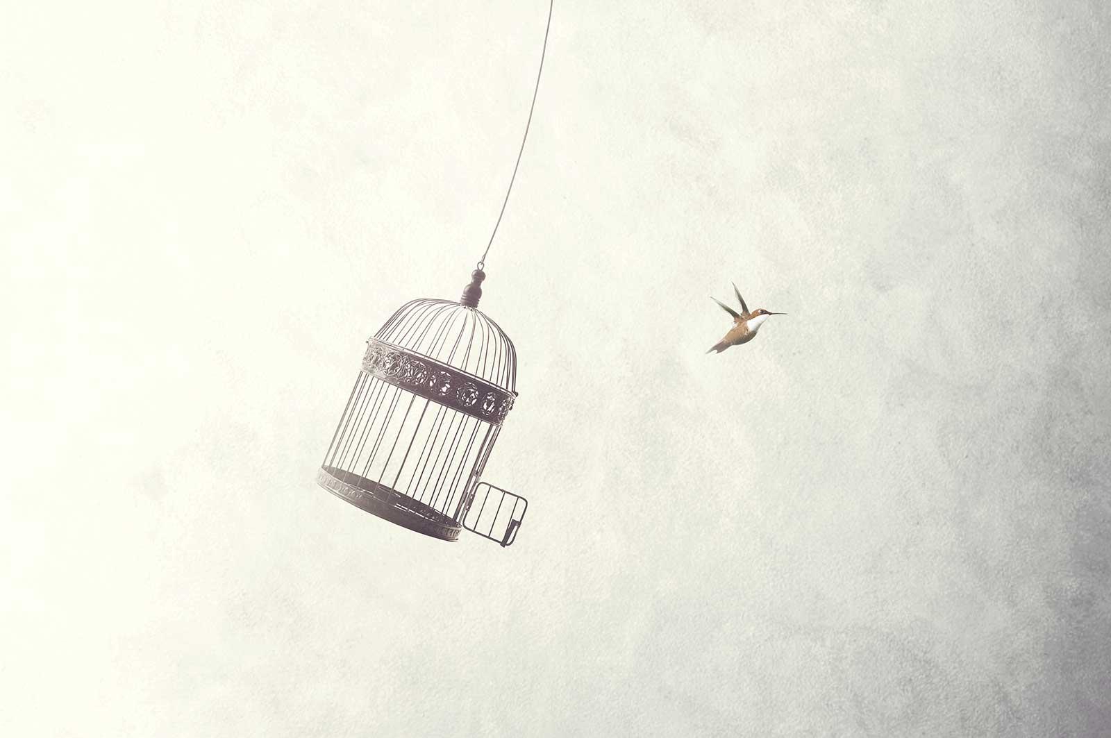 Vogel bevrijd uit kooi, Mentaal vrij met interventie psychosociale begeleiding